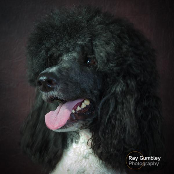 Pet Dog Portrait