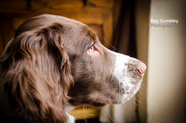 Portrait Pet Dog
